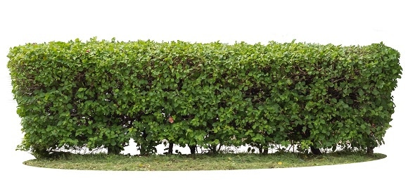 security hedge
