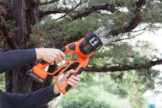 Trim Trees and Manage Branches